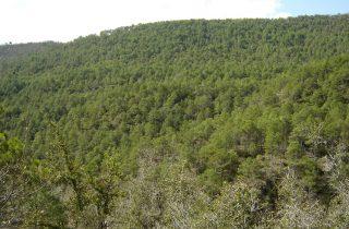 UP La Vall de Rialb